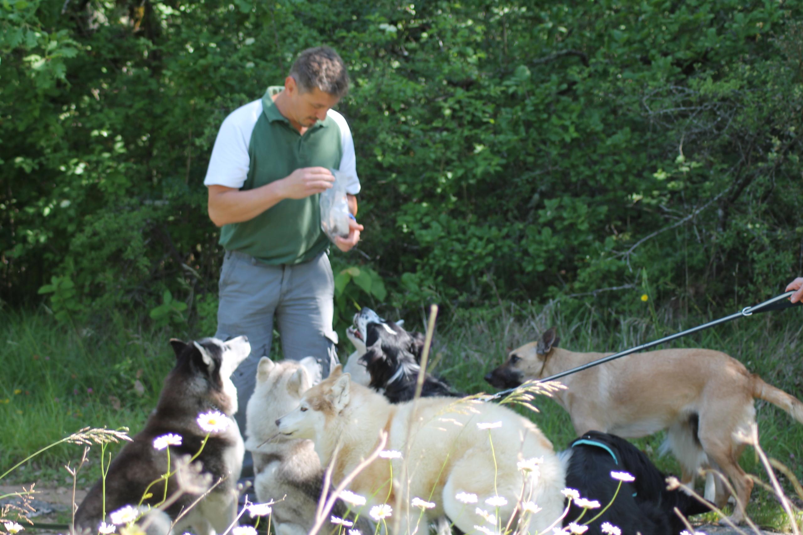 Balades canines Au Coeur des Chiens Angoulême